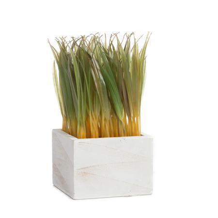 Купить Растение декоративное в горшке Knaki